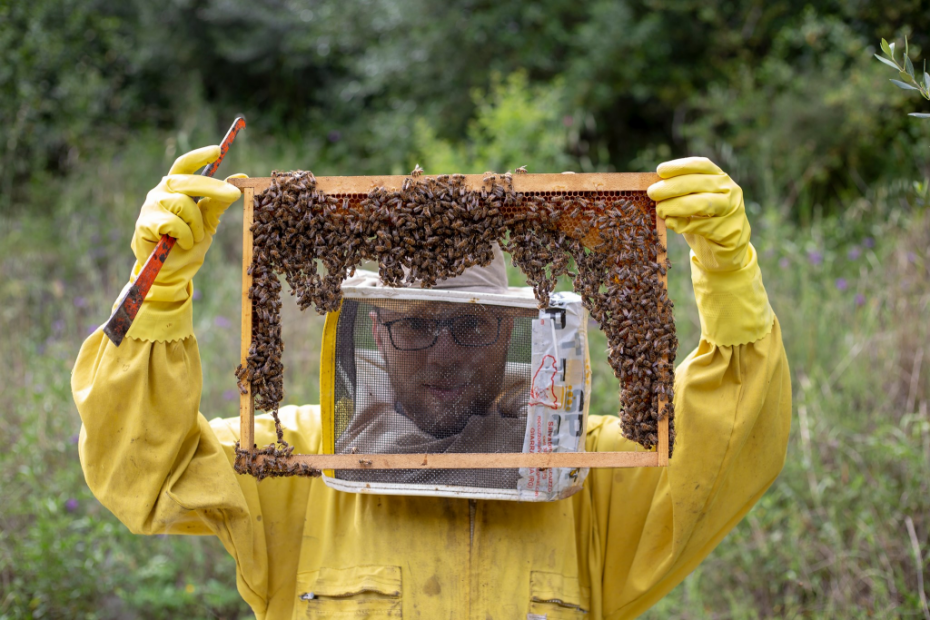 Giorgio and his bees